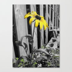 Against The Boards Canvas Print