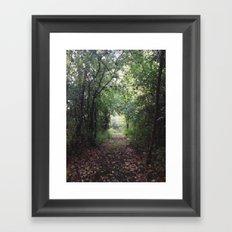 Natures Path Framed Art Print