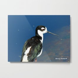 Juvenile Black Necked Stilt Metal Print