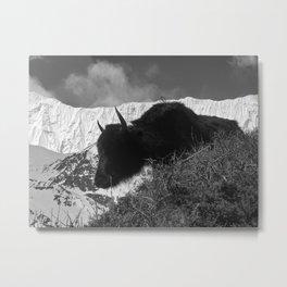 Annapurna Yak Metal Print