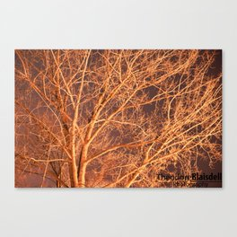 Tree @ Night Canvas Print