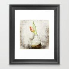 Single Tulip Still Life Framed Art Print