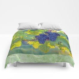 Toward the Sun Comforters