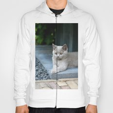 Bikkel the cat ! Hoody