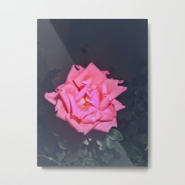 A Rose is a Rose is a Rose (Night Photo 2) [Cecilia Lee] Metal Print