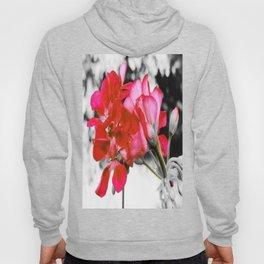 Flowers : Pop of Color Hoody