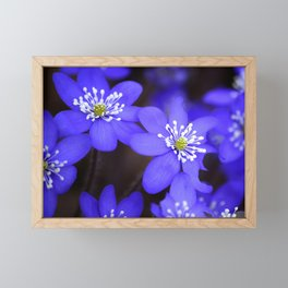 First Spring Flowers in Forest Framed Mini Art Print