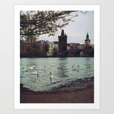 PRAGUE SWANS Art Print