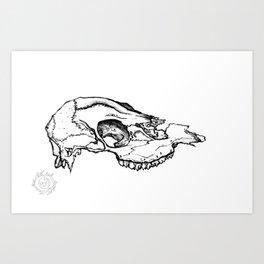 Deer Skull Study Art Print