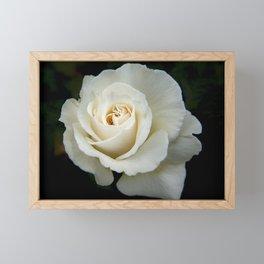 Rose Bloom Framed Mini Art Print