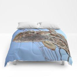 Chameleon Understudy Comforters