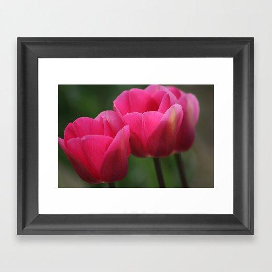 Tulip Festival 1 Framed Art Print
