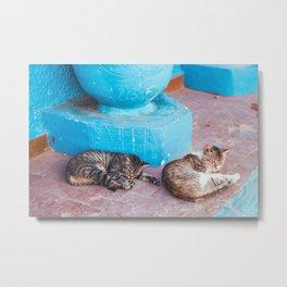 Kitty Nap Metal Print