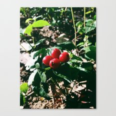 Spider Fruit Canvas Print