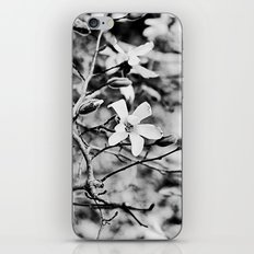 Blooms and Buds iPhone & iPod Skin