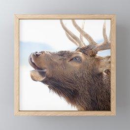 Watercolor Elk Bull 18 Framed Mini Art Print