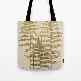 Vintage Fern Botanical Tote Bag