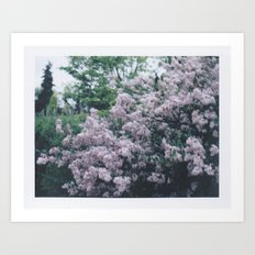 Korean Lilac Polaroid Art Print