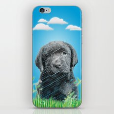 labrador puppy iPhone & iPod Skin