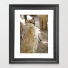 Smiling Kangaroo Framed Art Print
