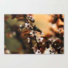 Cherry Blossom 3 Canvas Print