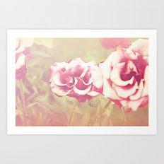 roses of the setting sun Art Print