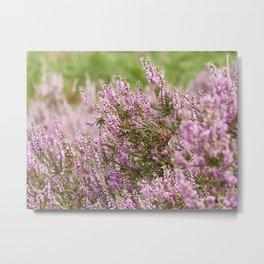 Summer Pink Purple Heather Metal Print