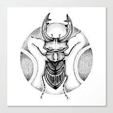 Stag Beetle Canvas Print