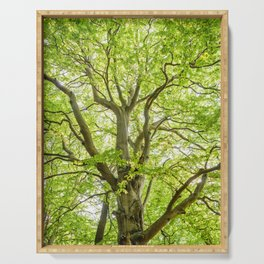 Beech Tree Serving Tray