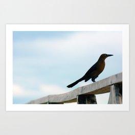 Bird collection _ 01 Art Print