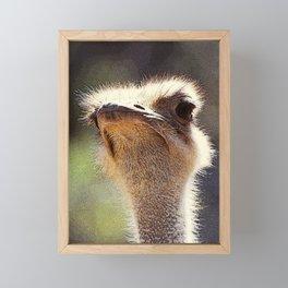 Flightless but fierce Framed Mini Art Print
