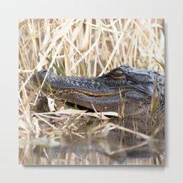 Watercolor Alligator 04, Okefenokee Swamp, Geogia, The Sunbather Metal Print