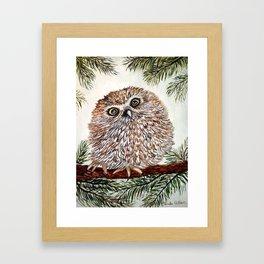 Baby Pygmy Owl Framed Art Print