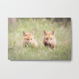 Learning to Hunt - Red Fox Pups Animal / Wildlife Photograph Metal Print