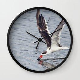 Black skimmer (Rynchops niger) feeding in Flight Wall Clock