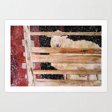 virgin wool Art Print