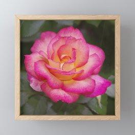 Rainbow Sorbet Rose Framed Mini Art Print