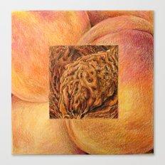 Fresh: Peach Canvas Print