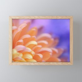 Flower Sunrise | cute pastel flower, peach flowers, orange floral pattern, pretty petals, macro Framed Mini Art Print