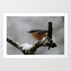Nuthatch in the winter Art Print