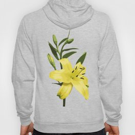 Yellow Lily on Sky Blue Background Illustrated Print Hoody