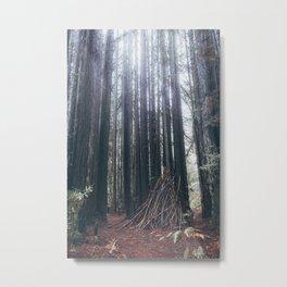Muir Forest Metal Print