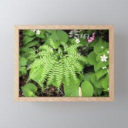 Maidenhair Fern, Adiantum Pedatum, And Friends Framed Mini Art Print