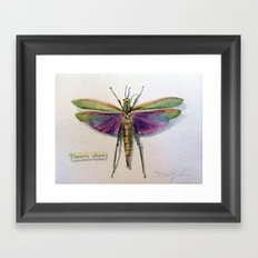Titanacris albipes Framed Art Print