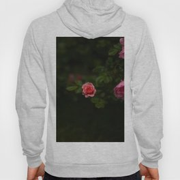 Beautiful Pink Roses With Green Leaves Floating On A Black Background Hoody