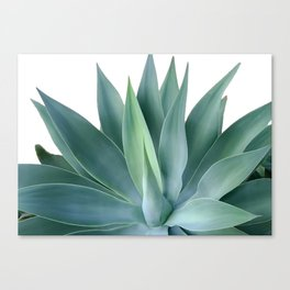 Agave blanco Canvas Print