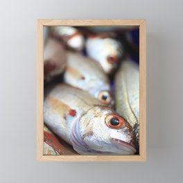 Fresh catch Framed Mini Art Print