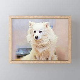 American Eskimo Dog Framed Mini Art Print