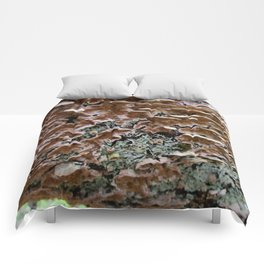 Fungi on a Fallen Tree Comforters