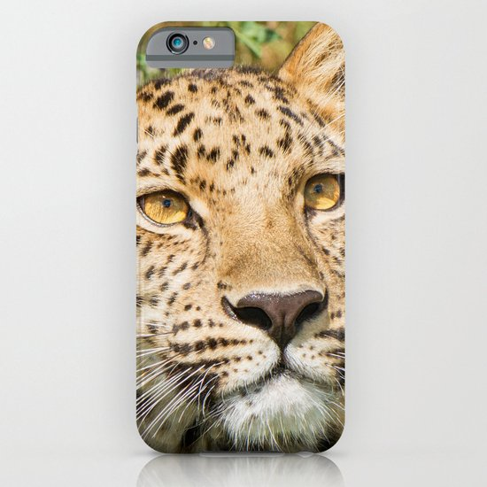 LEOPARD LOVE iPhone & iPod Case